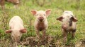 Entrepreneurship: The Three Little Pigs' Lessons for Success