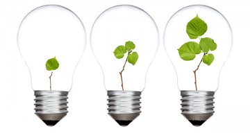 Three light bulbs with green plants inside. Isolated on white background